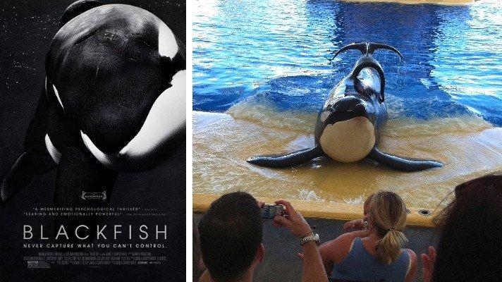 blackfish documentary 2013